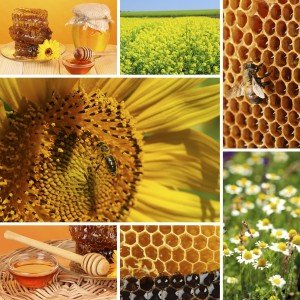 Food Intolerance Beekeeping collage